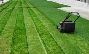 cutting grass in neat lines